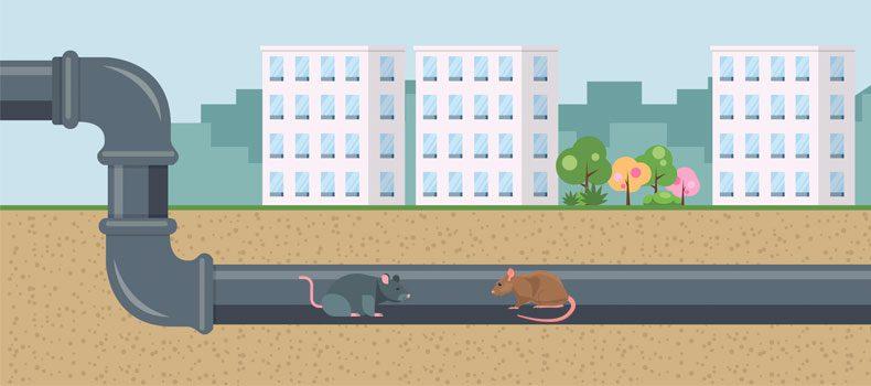 rotter rekord aarhus